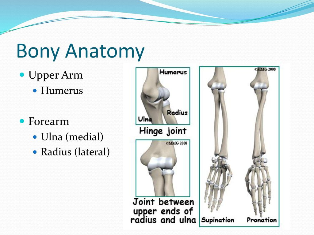 Functional Anatomy & Clinical Presentation - ppt download