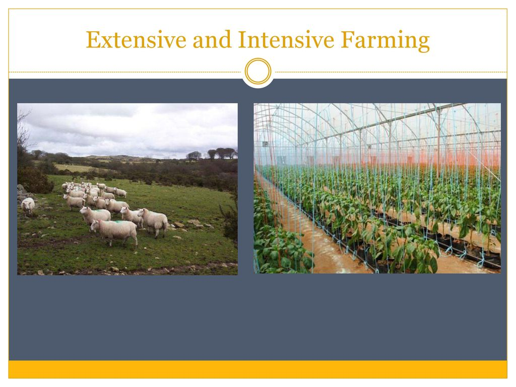 Agricultural Systems and Food Production - ppt download