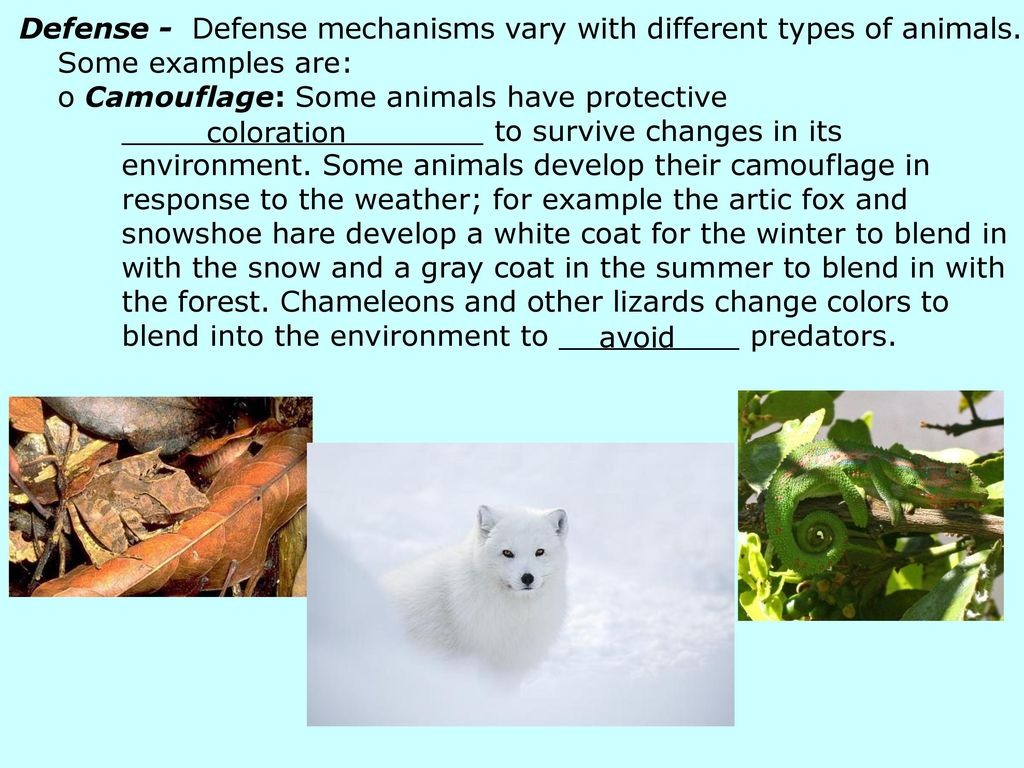 Animal Behavior Notes Ppt Download