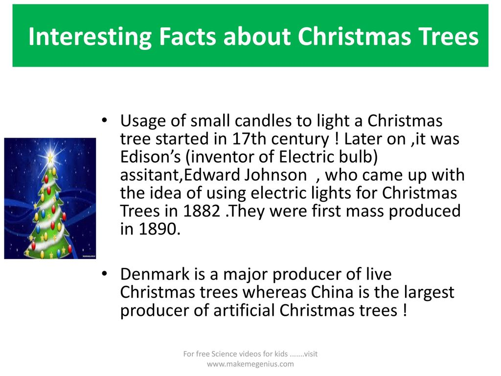 Christmas Trees –Interesting Facts - ppt download