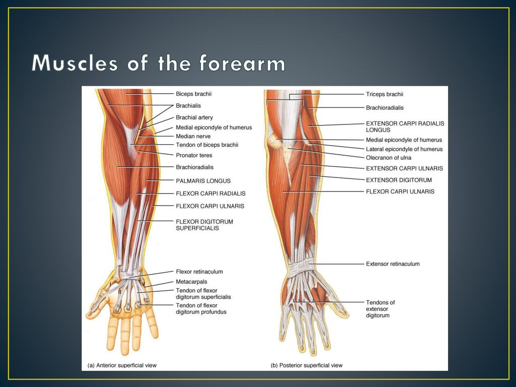 Unit 7 Upper Extremity. - ppt download