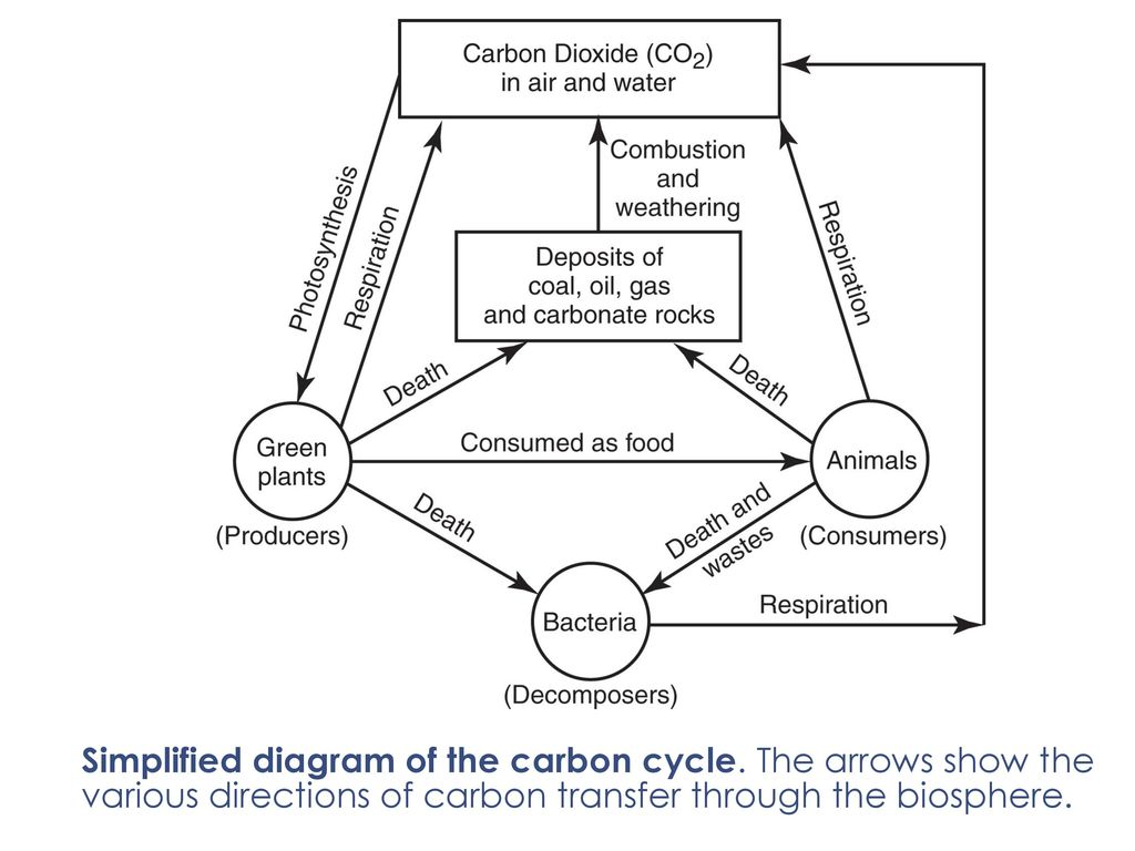 Hydrologic nutrients cycle ppt download 14 simplified diagram of the carbon cycle ccuart Choice Image