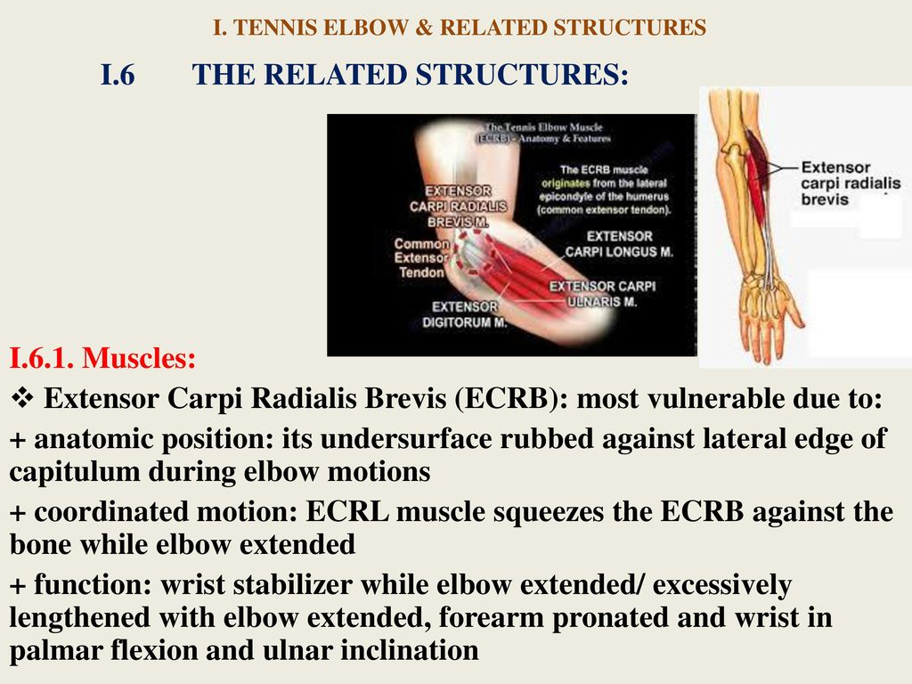 TENNIS ELBOW & PHYSICAL THERAPY - ppt download