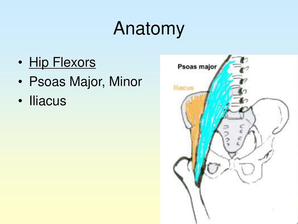 Hip, Thigh, and Knee. - ppt download