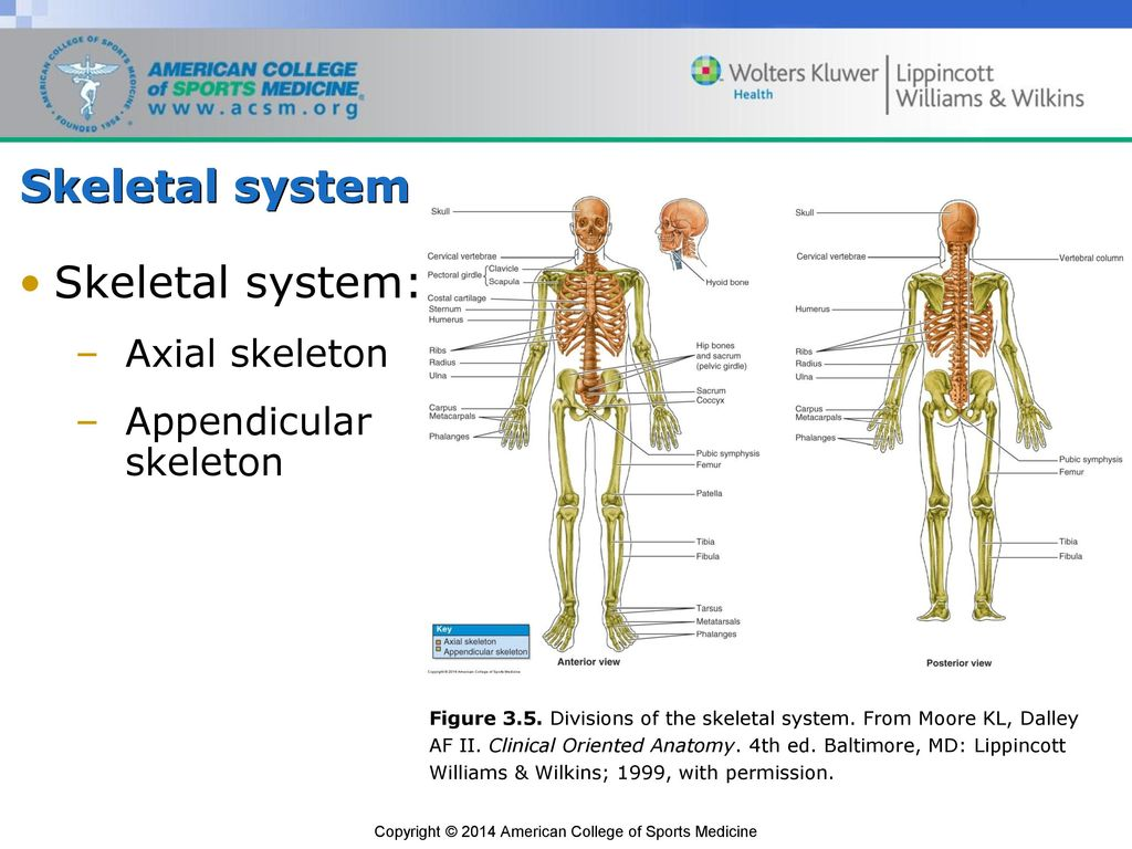 Anatomy and Kinesiology - ppt download