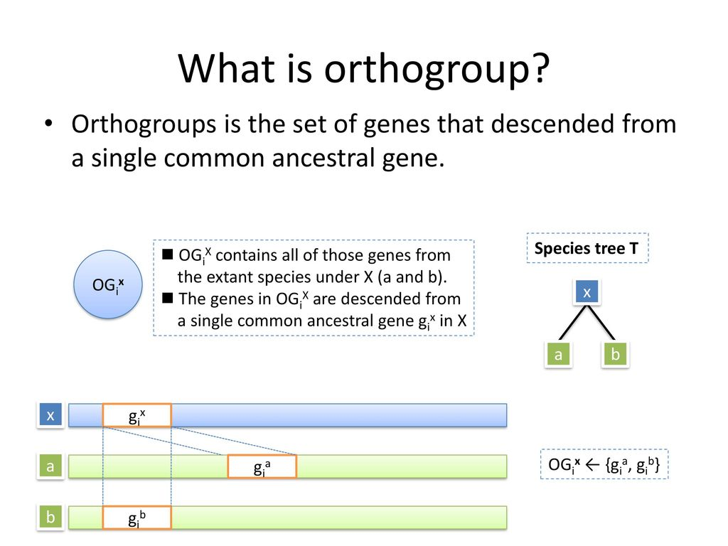 What is orthogroup Orthogroups is the set of genes that descended from a single common ancestral gene.