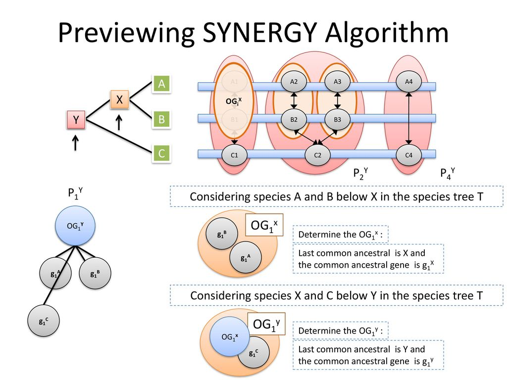 Previewing SYNERGY Algorithm