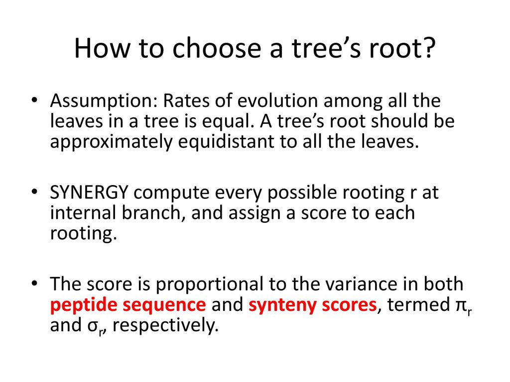How to choose a tree's root
