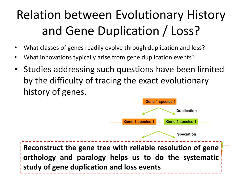 Relation between Evolutionary History and Gene Duplication / Loss