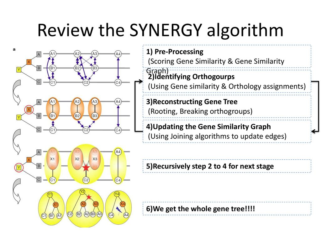 Review the SYNERGY algorithm