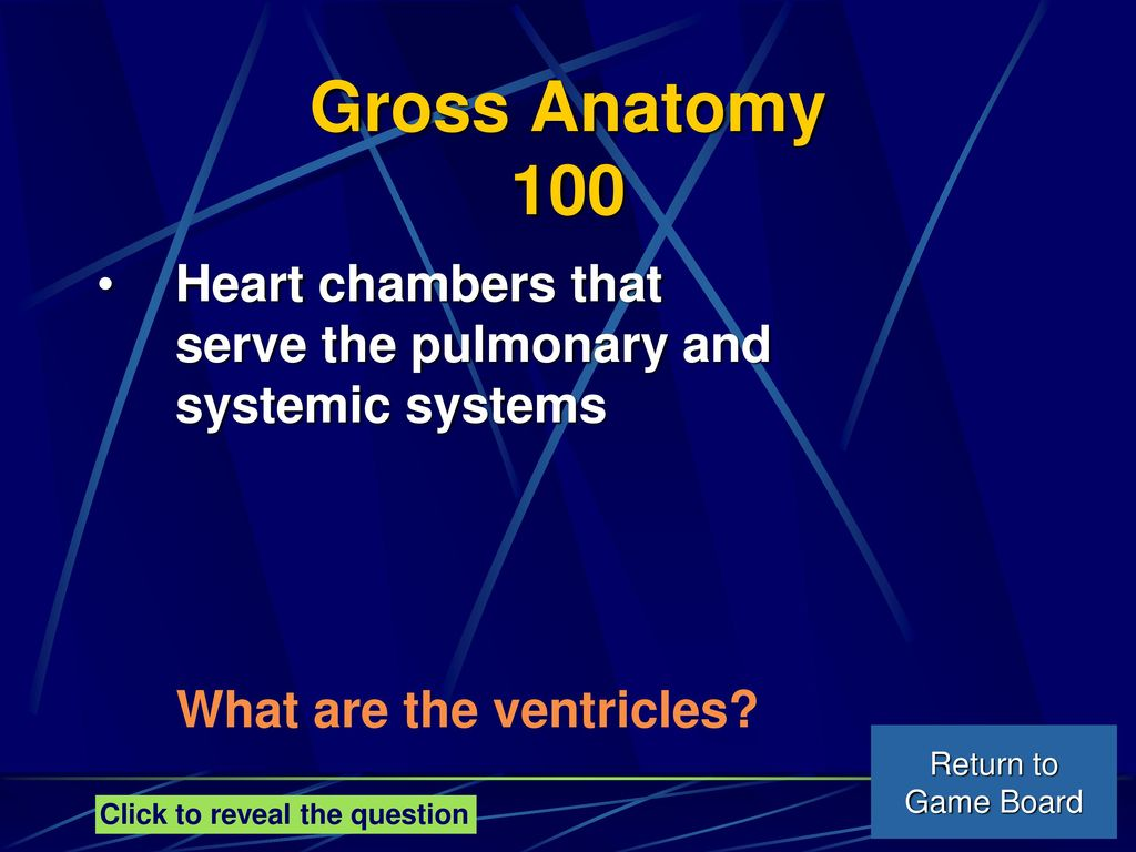 Cardiovascular System - ppt download