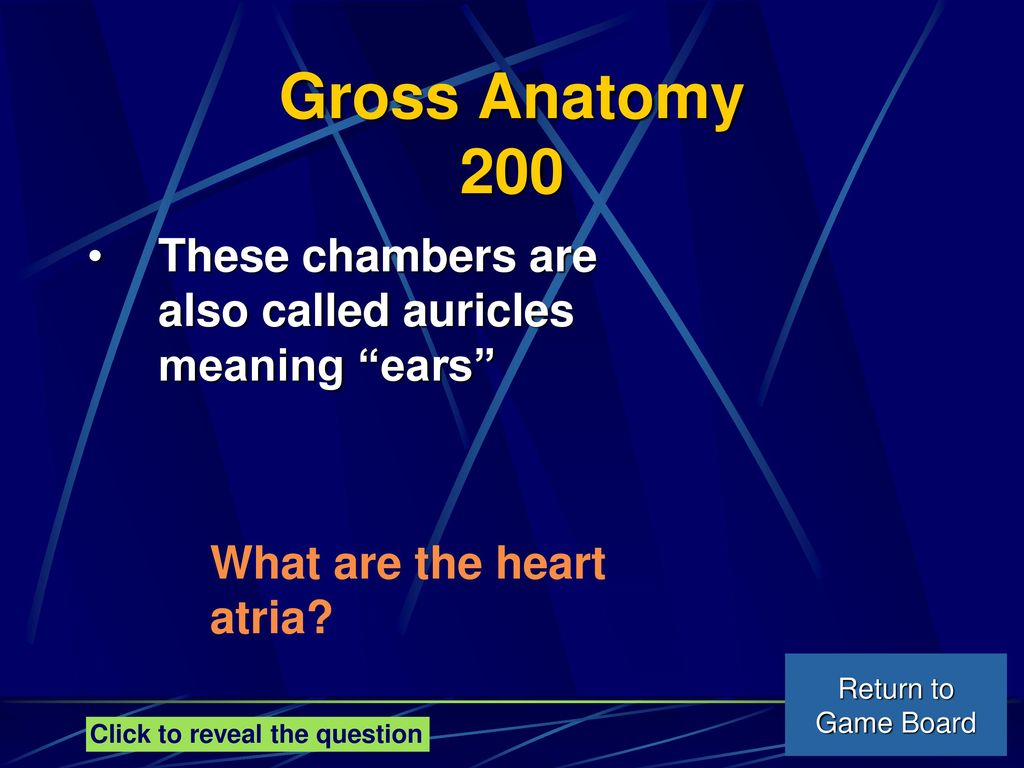 Meaning Of Gross Anatomy Image collections - human body anatomy
