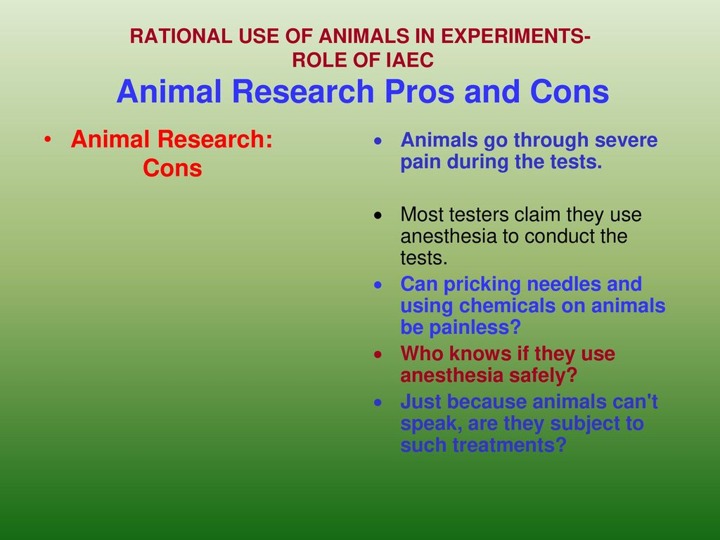 the horrors of animal experimentation essay Animal testing is used in many different industries, mainly medical and cosmetic animals are used in order to ensure the products are safe for the use of humans medical research has also been carried out on animals, and successfully developed new and effective medical treatments.