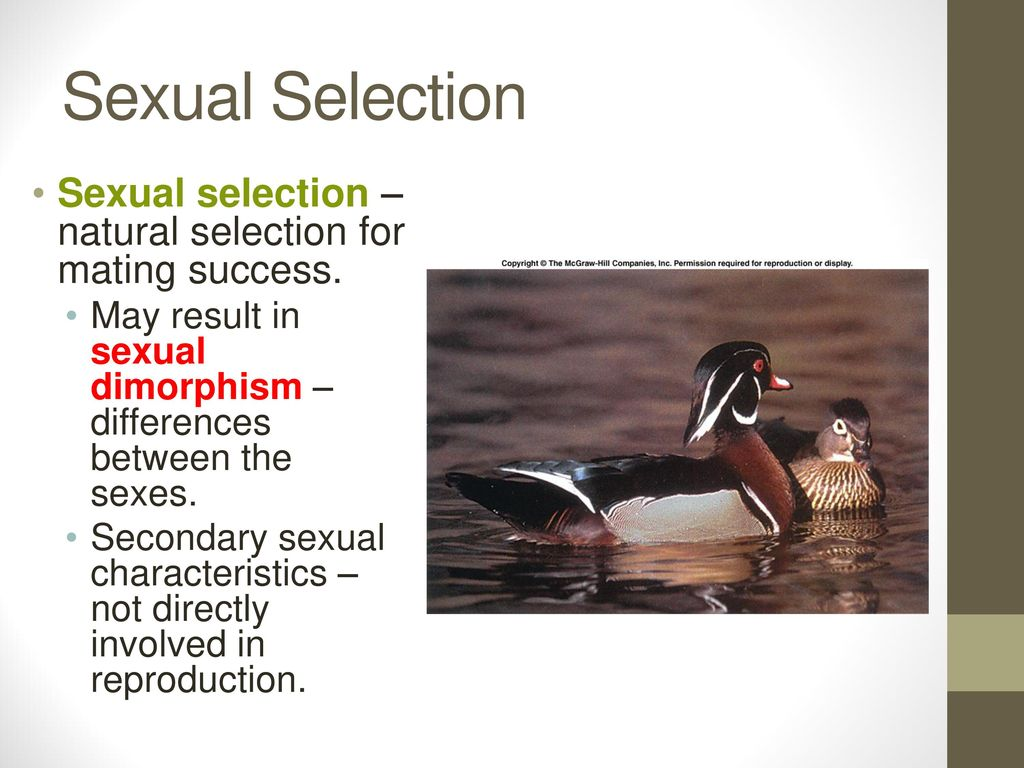 How does natural selection and sexual selection differ
