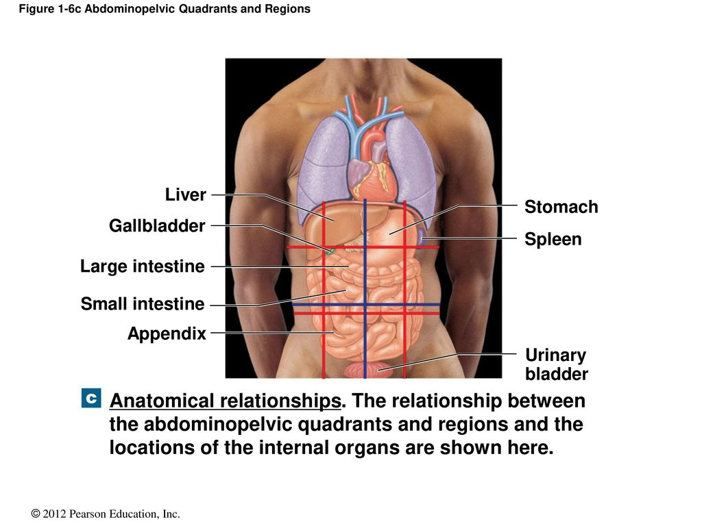 An Introduction To Anatomy And Physiology Ppt Download