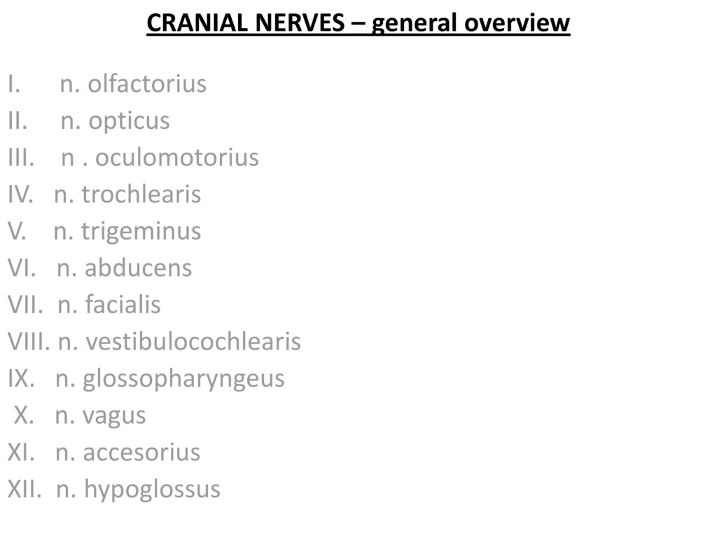 CRANIAL NERVES Prof. Peter Stanko, MD, PhD - ppt download