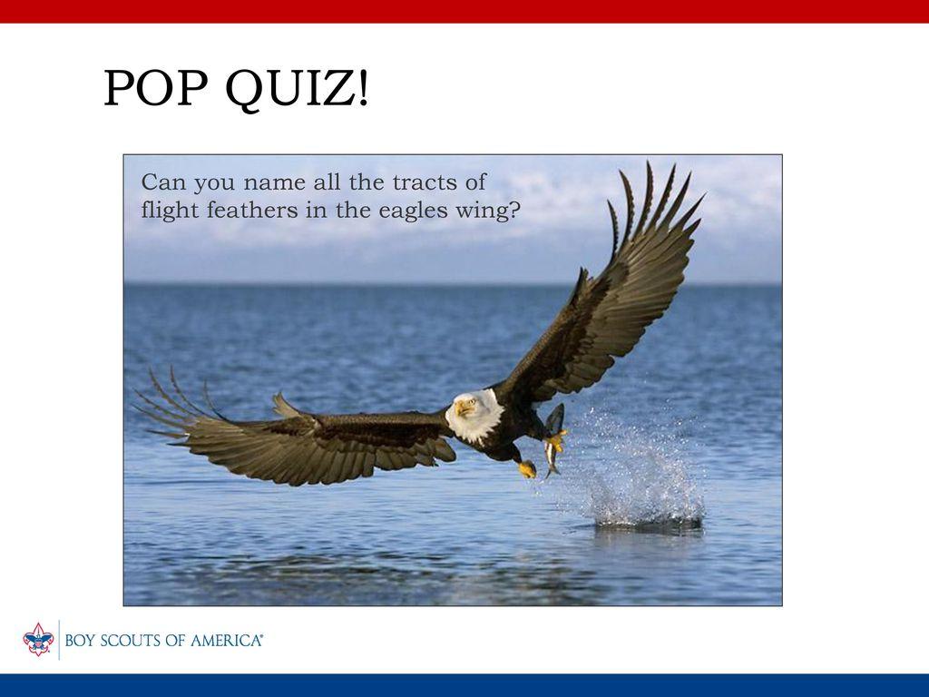 Bird Study Merit Badge Birds Of Ohio Part 1 Ppt Download Eagle Wing Diagram Bald Eagles Vs Vultures 23 Pop Quiz