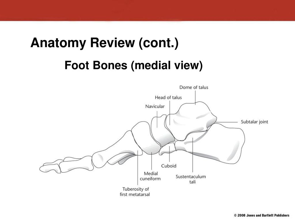 Injuries to the Lower Leg, Ankle, and Foot - ppt download