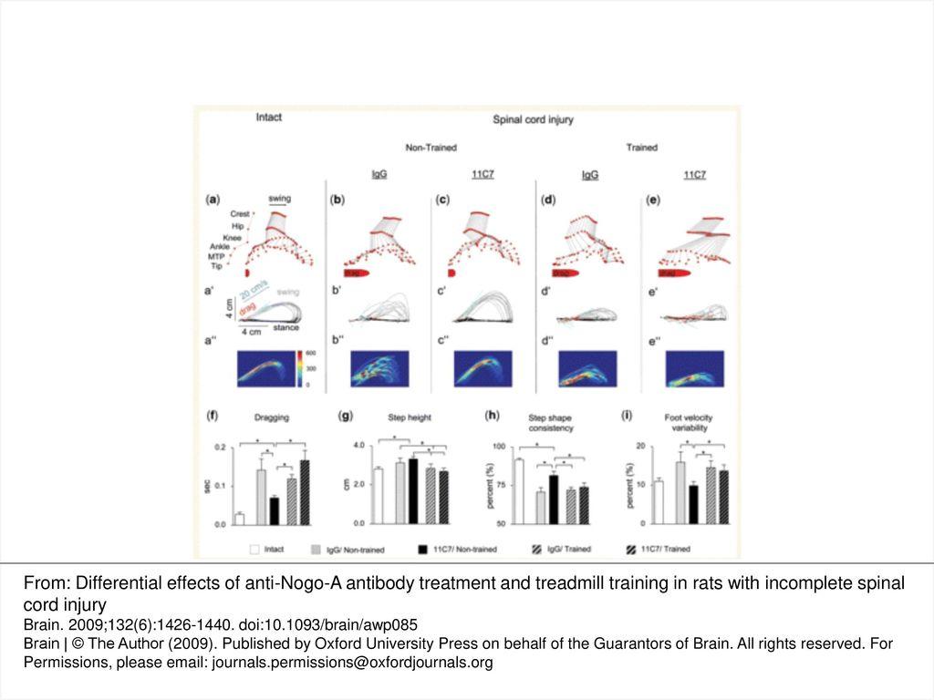 Swing Steps Diagram Detailed Schematics Rumba Dance Step Figure 1 Kinematic Analysis Of Hindlimb Movements Assessed During Bridge