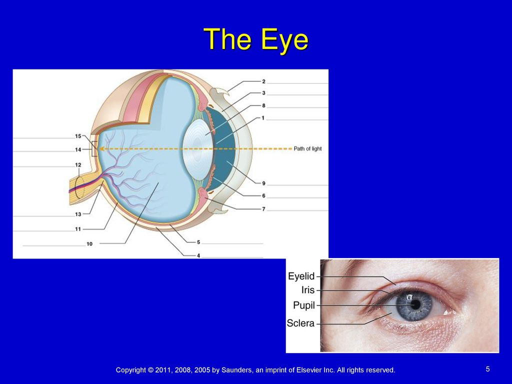 Labelled Diagram Of The Eye Golfclub