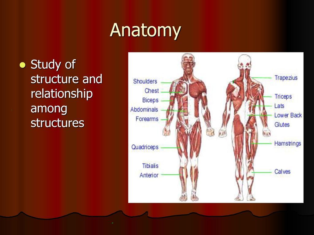 Anatomy and Physiology (AP) - ppt download