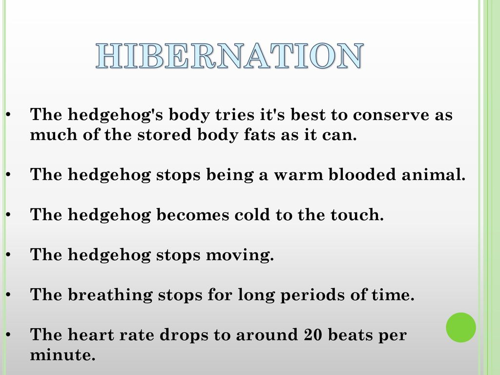HIBERNATION The hedgehog s body tries it s best to conserve as much of the stored body fats as it can.