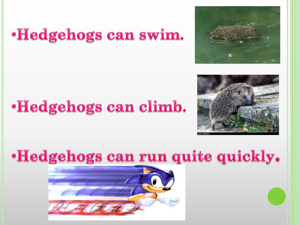 Hedgehogs can swim. Hedgehogs can climb. Hedgehogs can run quite quickly.