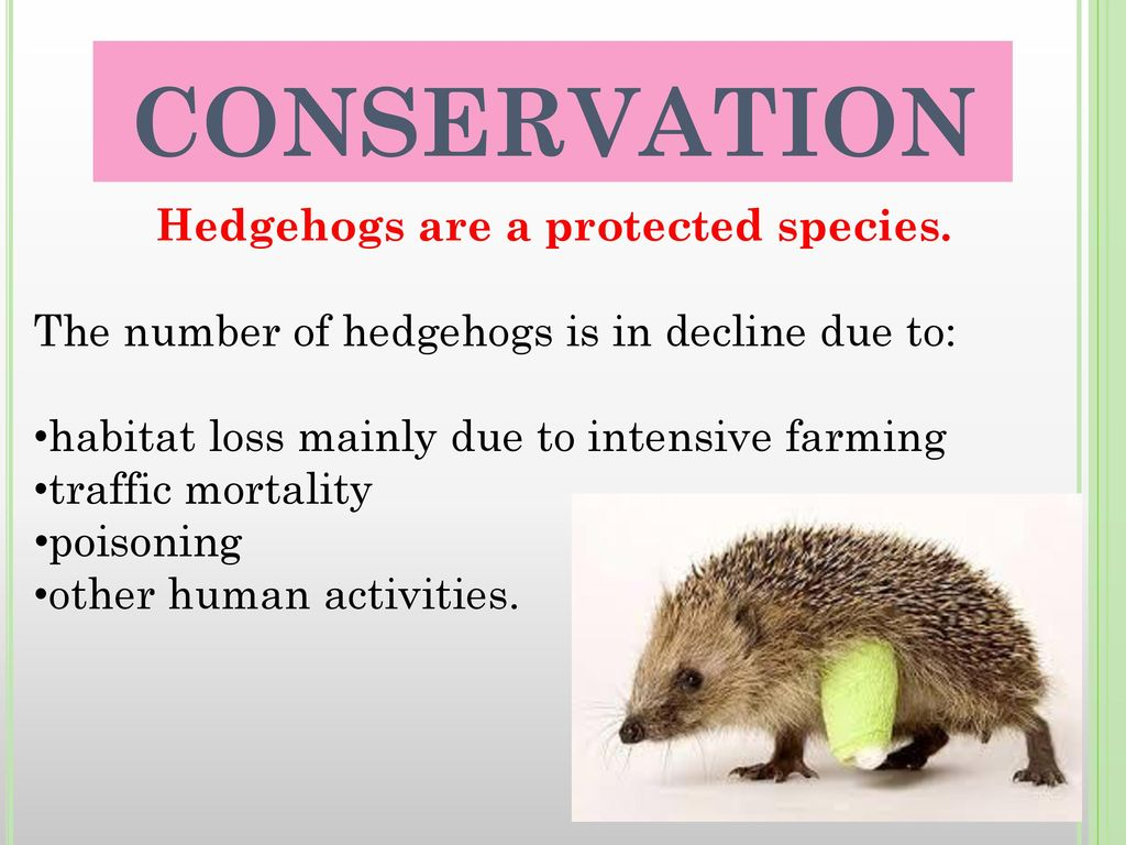 Hedgehogs are a protected species.