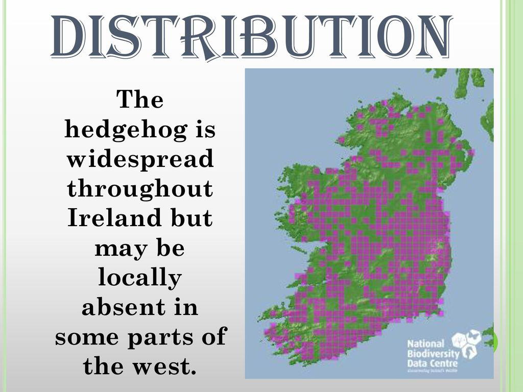 DISTRIBUTION The hedgehog is widespread throughout Ireland but may be locally absent in some parts of the west.
