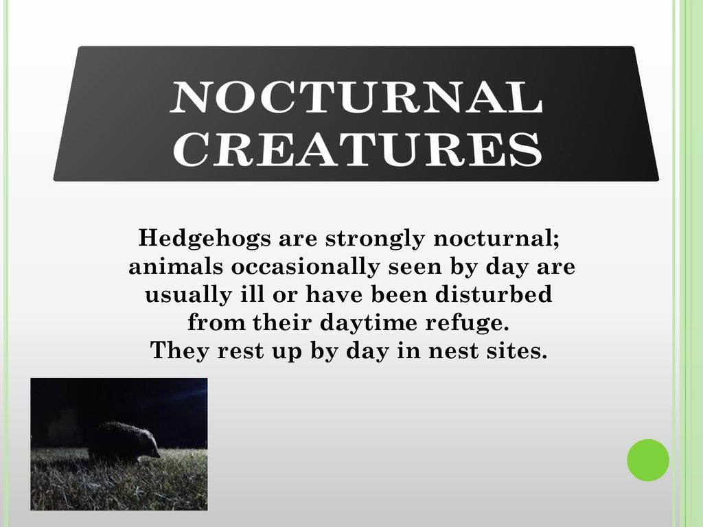 Hedgehogs are strongly nocturnal; They rest up by day in nest sites.
