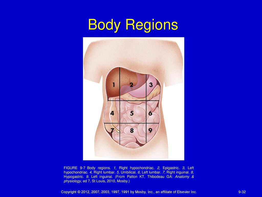 CHAPTER 9 BODY ORGANIZATION - ppt download