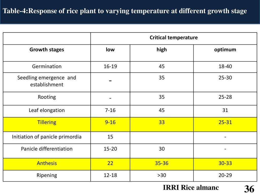 Effect of Climate Change on Rice Physiology Jadav Sagar K