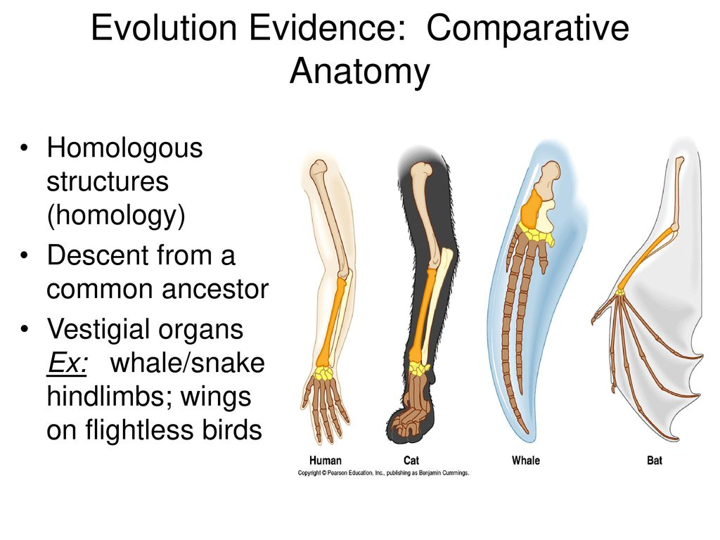 Evolution Unit: Darwin\'s Theory of Evolution - ppt download