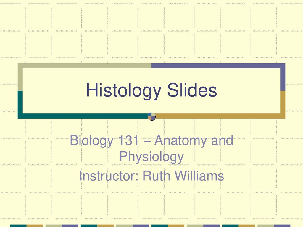 Biology 131 – Anatomy and Physiology Instructor: Ruth Williams - ppt ...