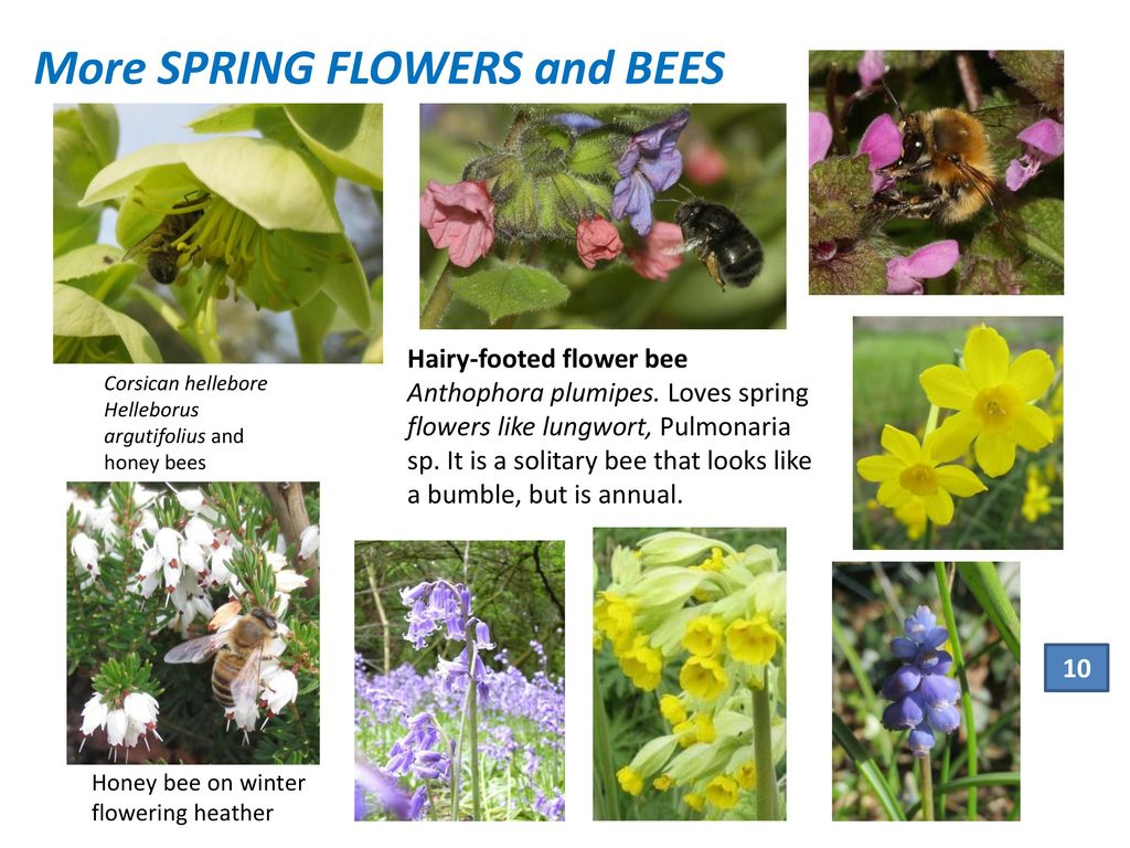 Planting For Bees And Other Pollinators In Your Garden Ppt Download