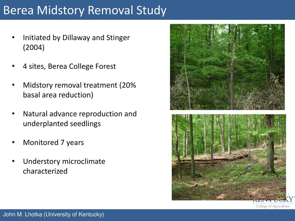 Berea Midstory Removal Study