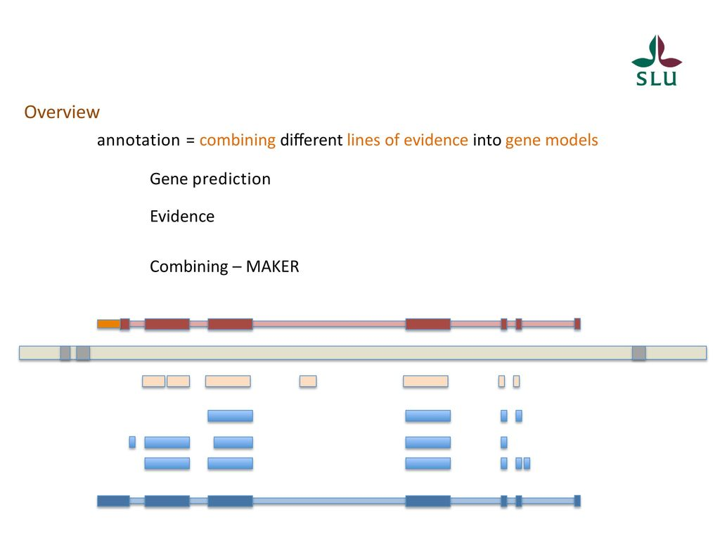 Annotating the data ppt download overview annotation combining dierent lines of evidence into gene models gene prediction evidence ccuart Image collections