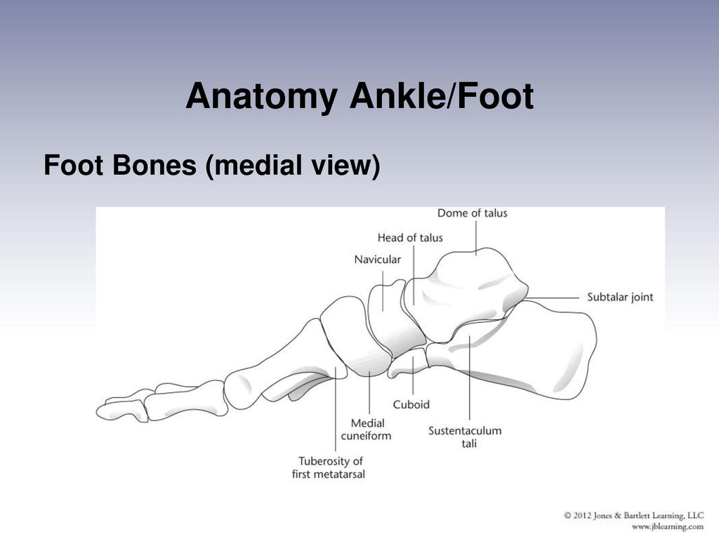 Injuries To The Lower Leg Ankle And Foot Ppt Download