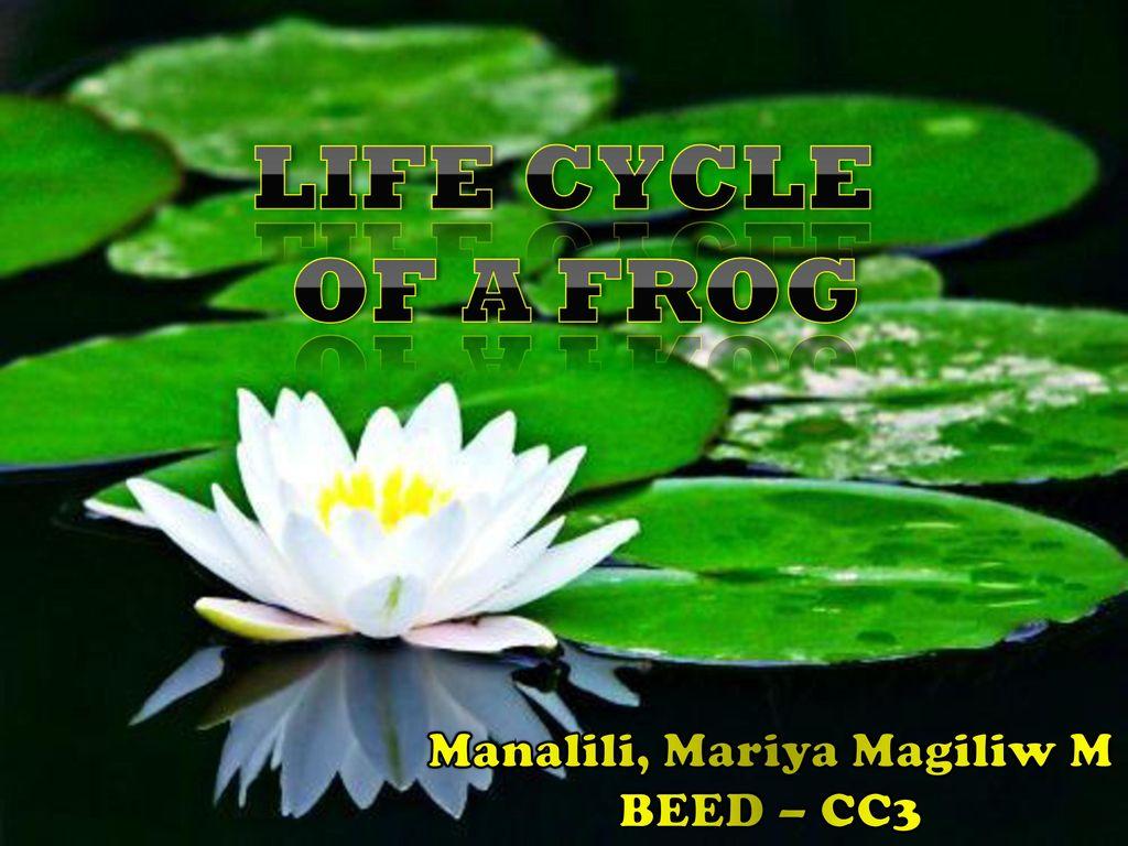 Manalili Mariya Magiliw M Ppt Download