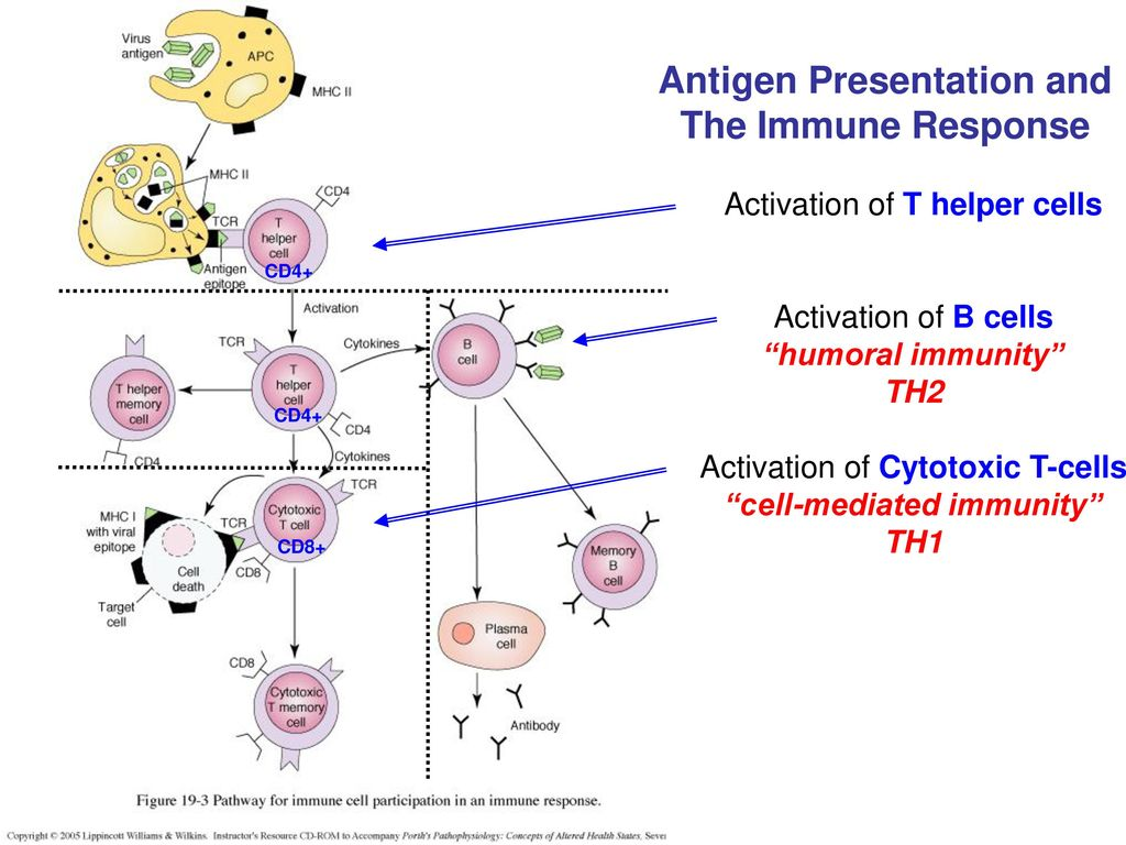 lecture outline antigens definition exogenous endogenous - ppt download