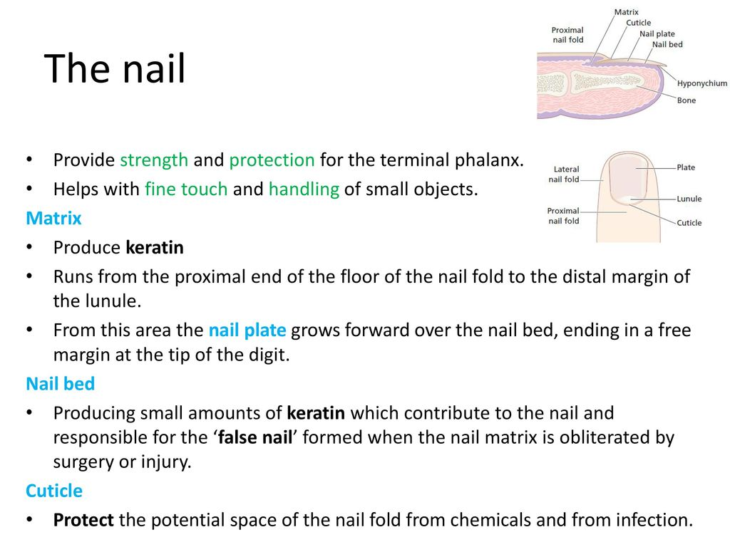 Regional dermatology Nail diseases - ppt download
