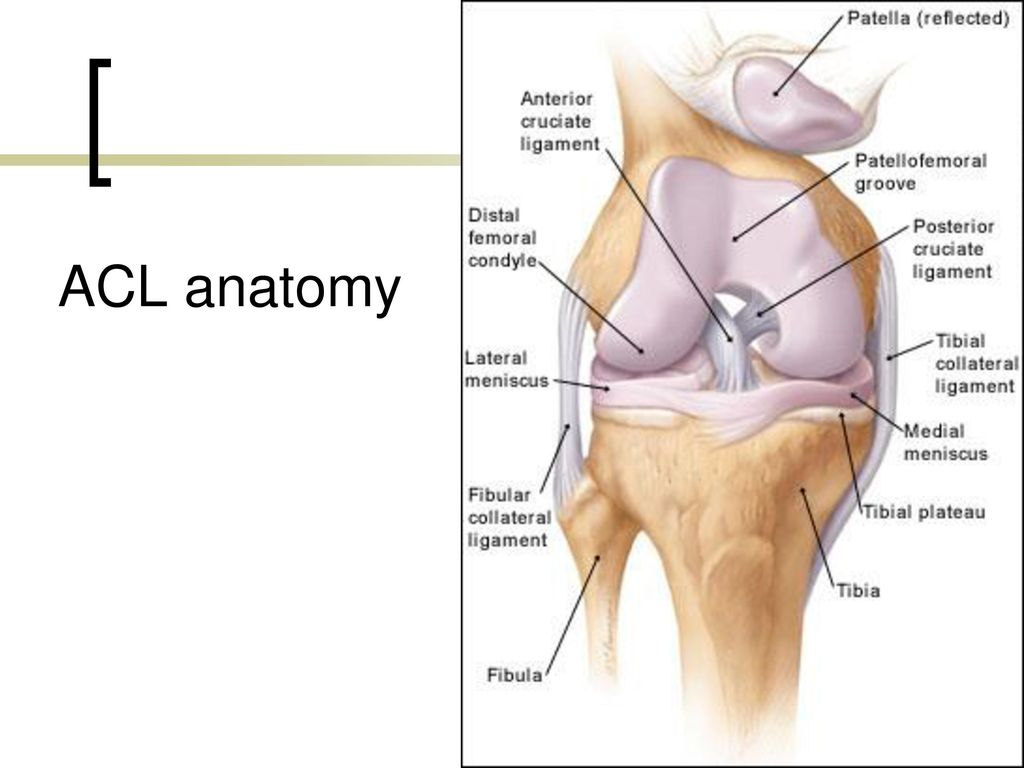 Anatomy and common injuries - ppt download