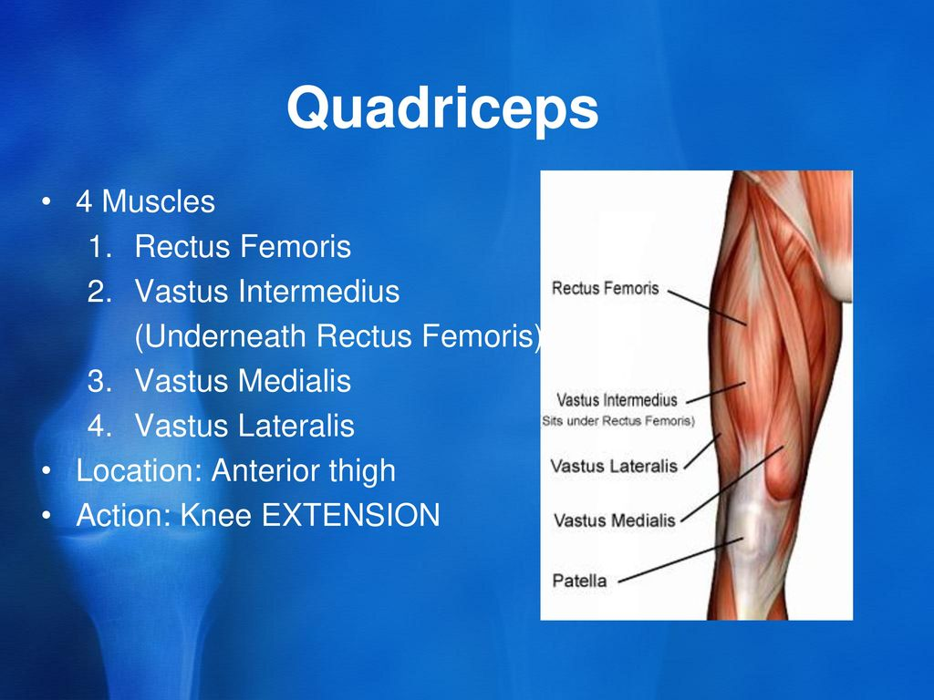 The Anatomy Of The Knee Muscles And Tendons Ppt Download