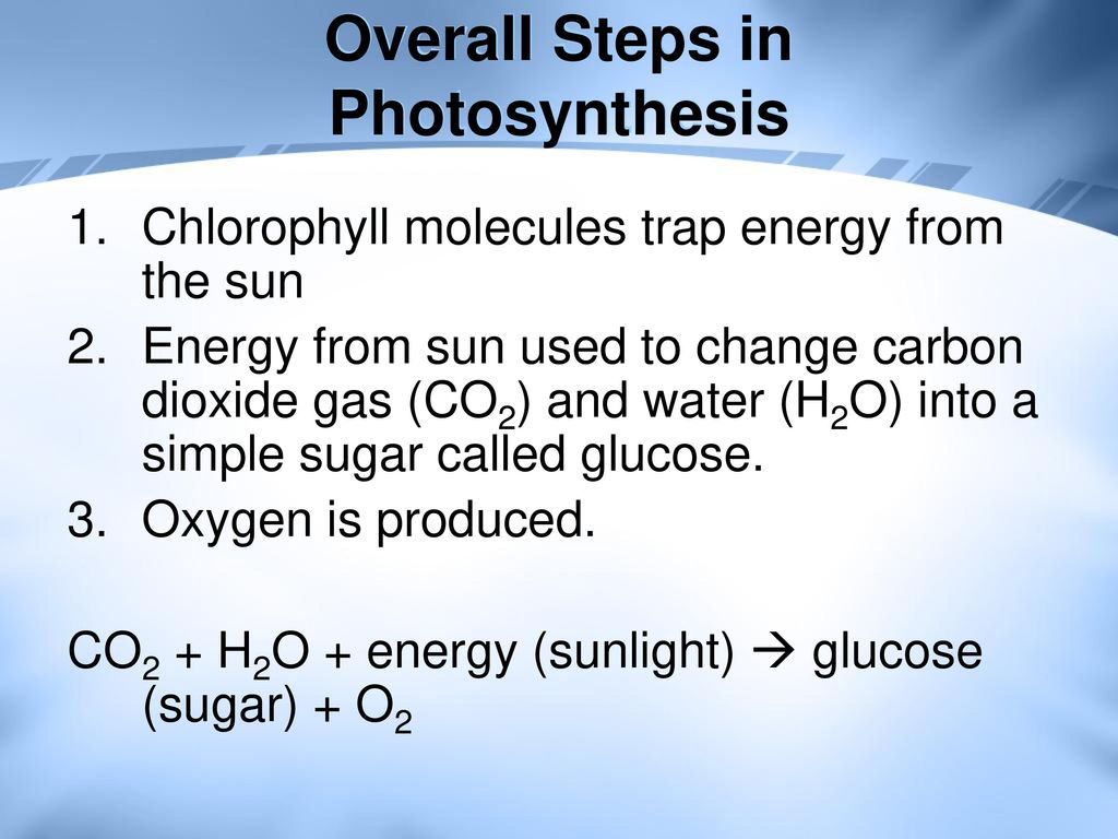 Overall Steps in Photosynthesis