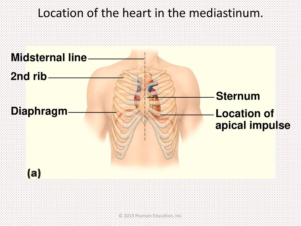 Heart Behind Sternum Topsimages