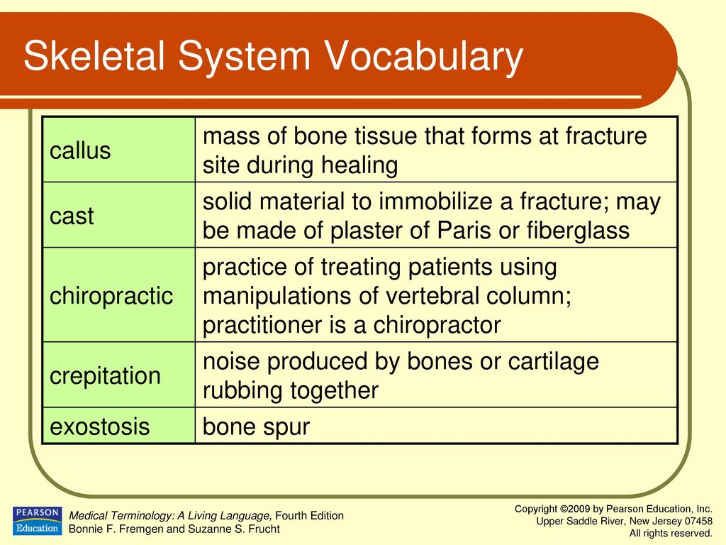 Chapter 4 Musculoskeletal System  - ppt download