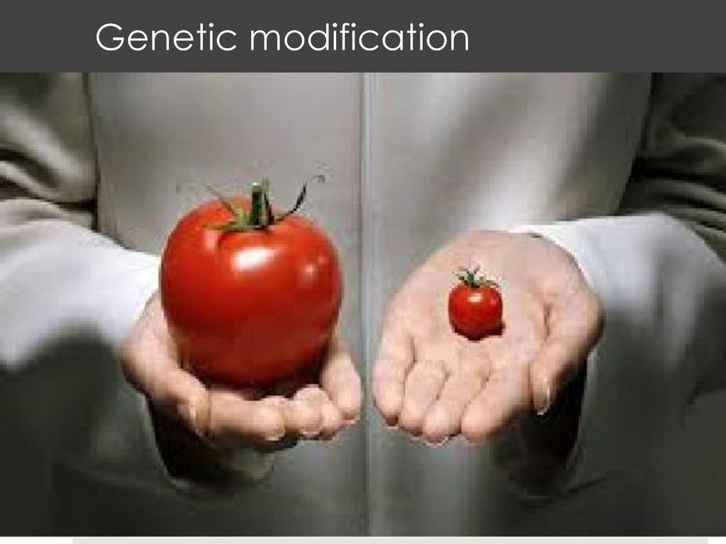 genetic modification ppt download