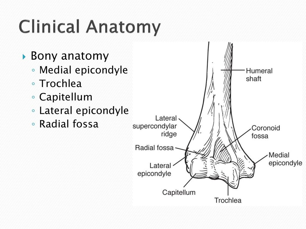 Examination of the Elbow and Forearm - ppt download