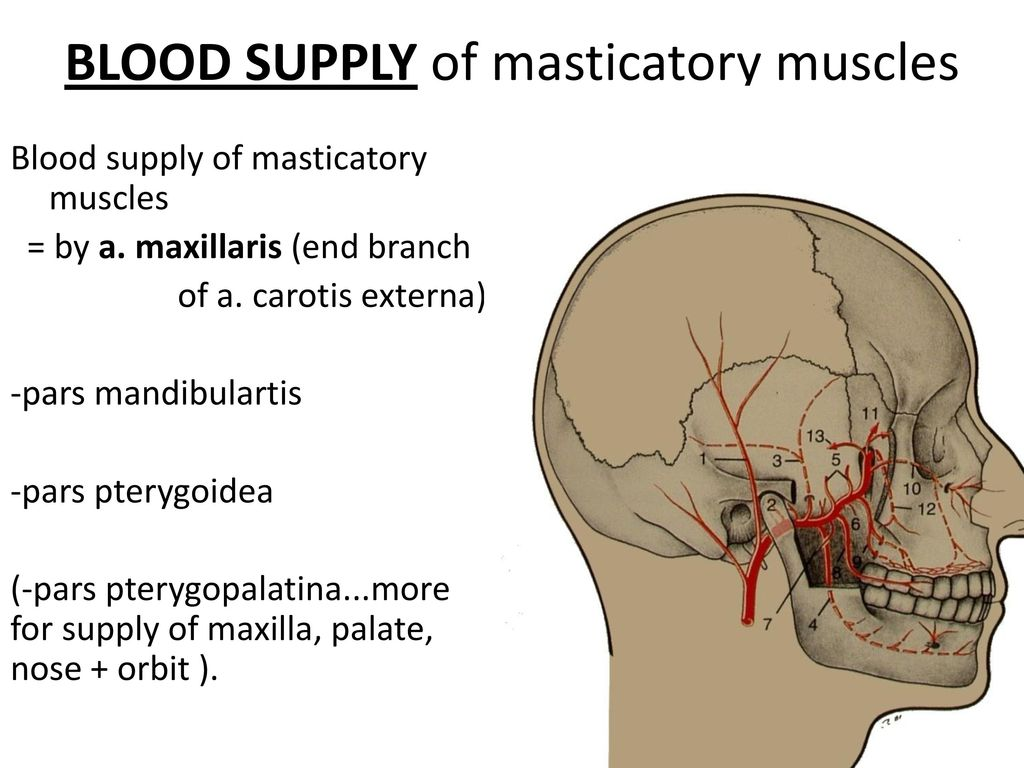 Muscles Of Mastication Ppt Download