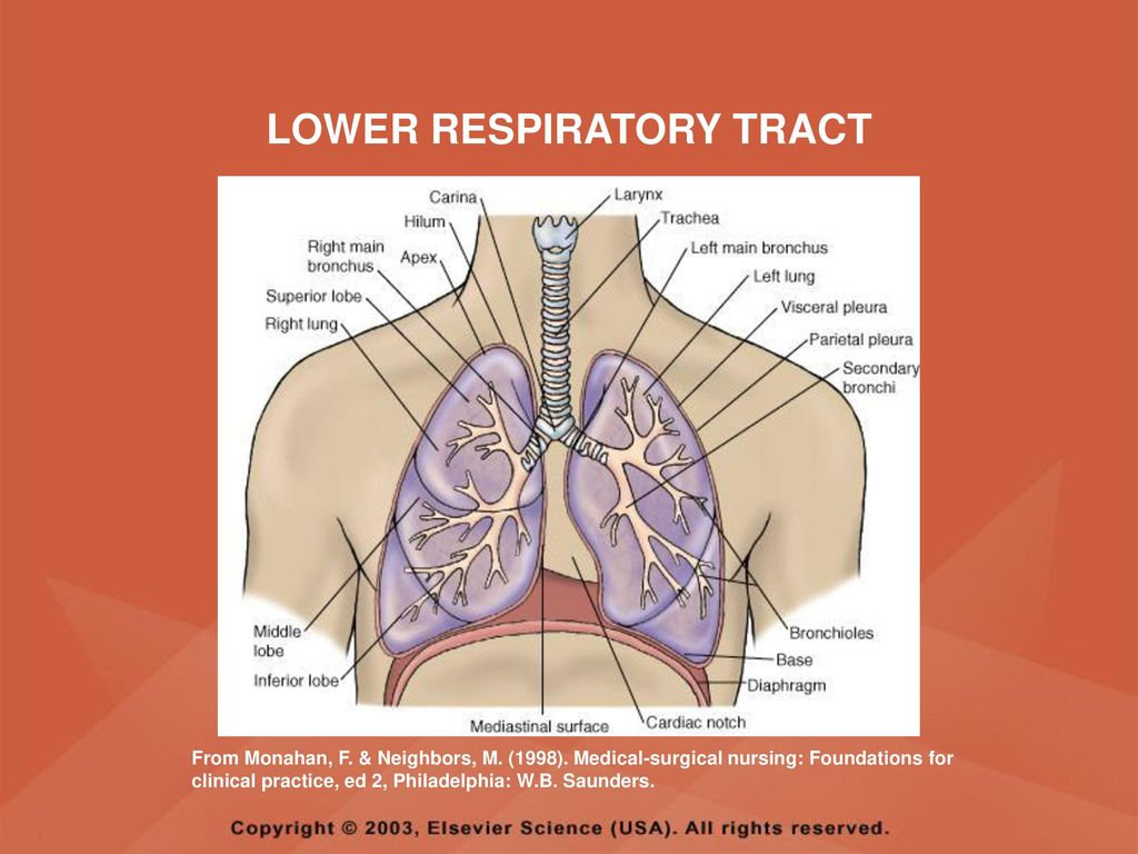 RESPIRATORY SYSTEM ANATOMY AND PHYSIOLOGY - ppt download